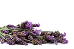 Lavender Royalty Free Stock Image