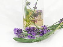 Lavender Stock Photos