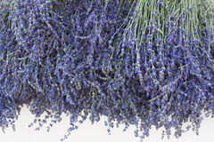 Lavender. A bouquet of lavender flower in natural sunlight on a white background Stock Photo