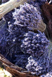 Lavender. Bunch of lavender seen on a market in Germany Stock Photos