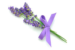 Lavender. Bunch of fresh lavender tied with bow Stock Photography