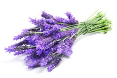 Lavender. A bunch of lavender flowers on a white background Stock Photography