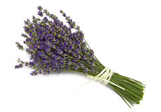 Lavender. On the white background Stock Image