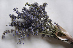 Lavender. Photo of lavender small bunch Stock Photos