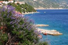 Lavender. Flowers in Makarska riviera region of Croatia. Adriatic Sea royalty free stock photography
