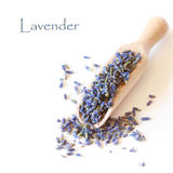 Lavender. Stock Photos