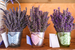 Lavender. Cute lavender in the cups Royalty Free Stock Photo