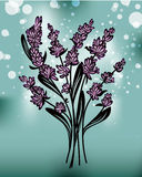 Lavender. Illustration of medicinal plant Lavender Stock Photography