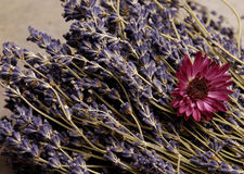 Lavender. Dried lavender and a purple flower Stock Photography