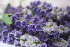 Lavender. Purple lavender with green leaf lying on the table Royalty Free Stock Photos