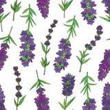 Lavender-03 Obrazy Royalty Free