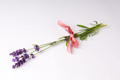 Lavender. With Pink Ribbon and White Background Stock Photography