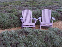 Lavender Adirondack Chairs. Make for a peaceful place to relax in this Lavender Garden Royalty Free Stock Photography