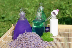 Lavender and aloe vera Stock Image