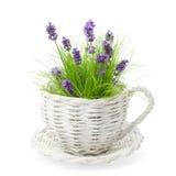 Lavender Amongst Grass Stock Images