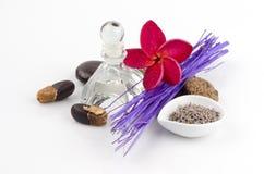 Lavender (angustifolia Lavandula (Ηνωμένο Βασίλειο). Στοκ φωτογραφία με δικαίωμα ελεύθερης χρήσης