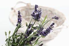 Lavender (angustifolia Lavandula) Στοκ Εικόνες
