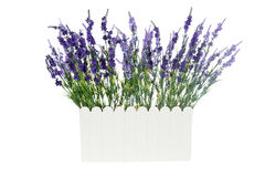 Lavender Artificial flowers in white Plastic vase isolated Stock Photography