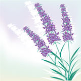 Lavender background Stock Photos
