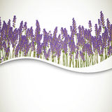 Lavender Background Royalty Free Stock Photos