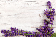 Lavender background. Lavender on white wooden antique textured background, top view, provence style Royalty Free Stock Photos