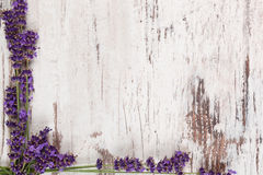 Lavender background. royalty free stock photo
