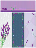 Lavender Banner_eps Royalty Free Stock Image