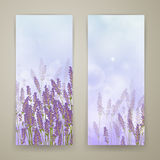 Lavender Banners Stock Photo