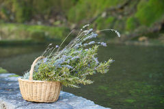 Lavender basket Royalty Free Stock Photos