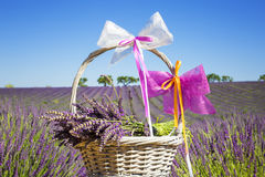 Lavender in a basket Stock Photo