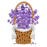 Lavender in basket Royalty Free Stock Image