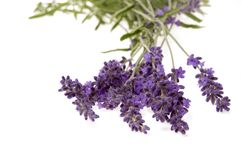 Lavender bath Royalty Free Stock Photography
