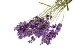 Lavender bath Royalty Free Stock Photo