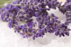 Lavender bath Royalty Free Stock Photo