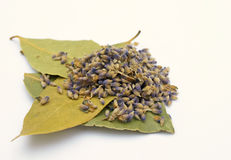 Lavender and Bay Stock Photography