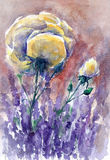 Lavender. Beautiful garden with blooming lavender, roses and delphinium.Picture created with watercolors Royalty Free Stock Photos