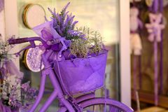 Lavender bicycle and flowers. Good quality close up picture of purple bicycle with lavender garden flowers in the basket. Bright and warm lavender tones, velvet royalty free stock images