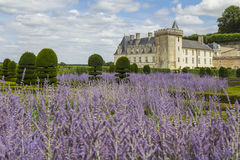 Lavender blooming in castle gardens Stock Images
