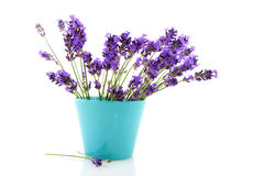 Lavender in blue flower pot. Bouquet lavender flowers in blue pot isolated over white royalty free stock image