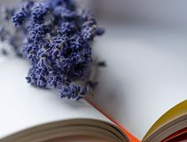 Lavender and Book. Dry lavender on an open book closeup Stock Image