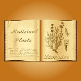 Lavender. Botanical illustration. Medical plants. Book herbalist. Old open book Royalty Free Stock Photo