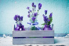 Lavender in bottles decor Stock Photography