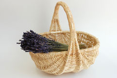 Lavender Bouquet in a Basket. A bouquet of dry lavender in a wicker basket on a white background Stock Photo