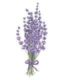 Lavender bouquet vector illustration