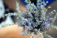 Lavender bouquet Stock Images