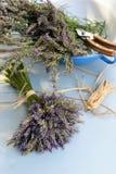 Lavender bouquet Stock Images