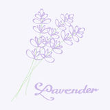 Lavender bouquet. Hand drawn flowers. Doodle Stock Photo