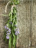 Bunch of lavender herb on old shabby rustic wooden background. Lavender bouquet hanging besides old shabby wooden wall to get dried, vertical, copy space royalty free stock images