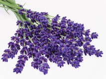 Lavender. Bouquet of herbs on white background Royalty Free Stock Photos