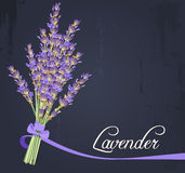Lavender bouquet. Illustration of bouquet of lavender Royalty Free Stock Photos